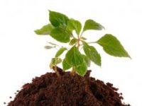 БиоГрунт - доставка торфа